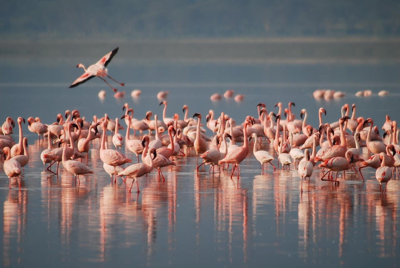 flamingi w celestun